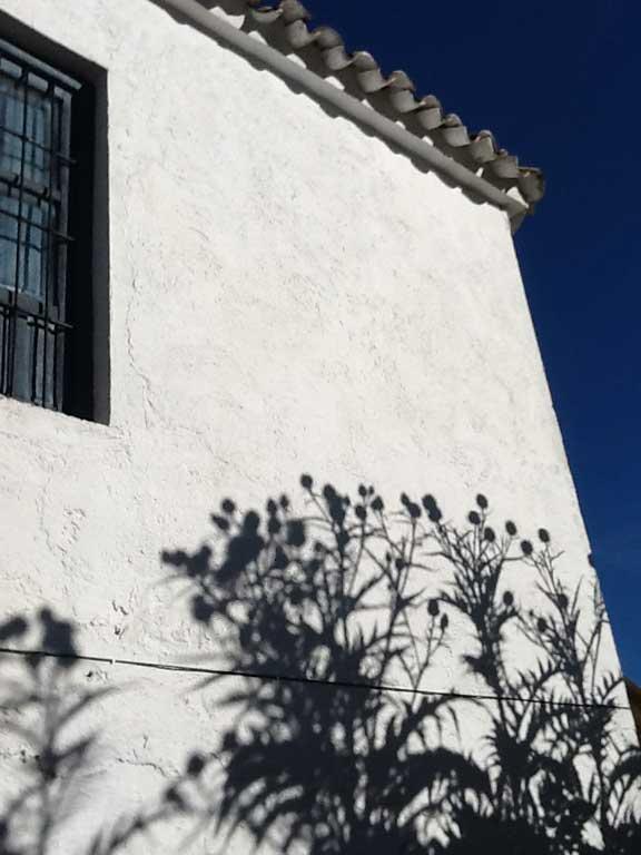 artichoke-shadows-on-house