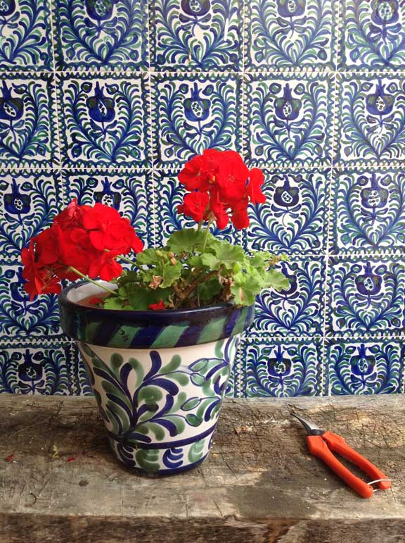 geranium-and-pot---andalucia