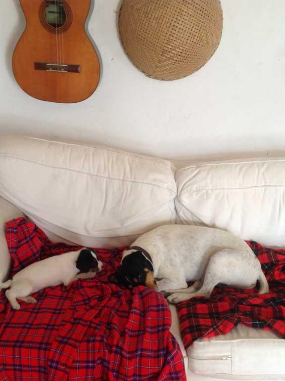 bodeguero-sofa